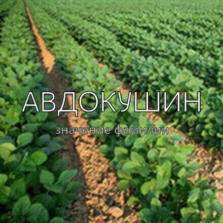 Происхождение фамилии Авдокушин