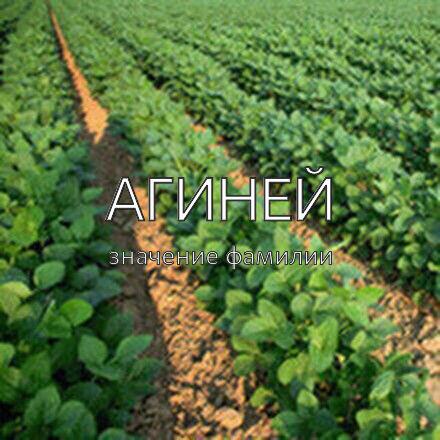 Происхождение фамилии Агиней