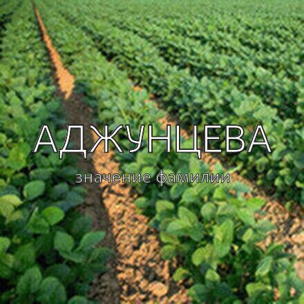 Происхождение фамилии Аджунцева
