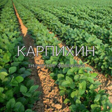 Происхождение фамилии Карпихин