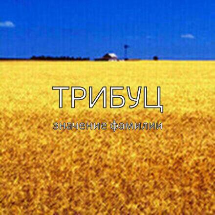 Происхождение фамилии Трибуц