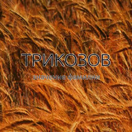 Происхождение фамилии Трикозов
